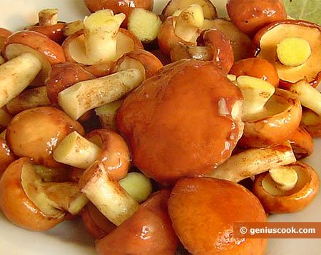 Funghi pinaroli