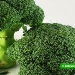 Broccoli, freschi