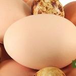 Uova di gallina e di quaglia