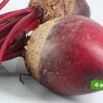 Barbabietola Rossa, fresca cruda