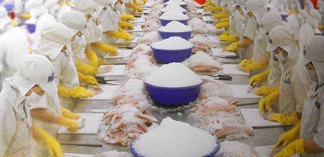 Lavorazione del pesce Pangasio