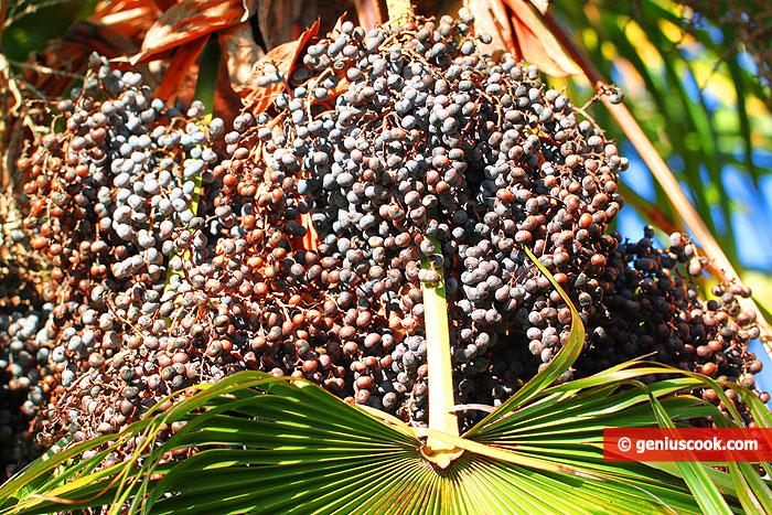Bacche della Palma da Olio